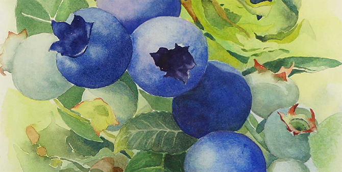 Marlyn.Hupperts.Blueberries