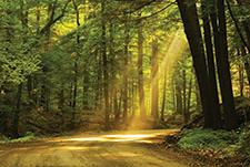 Aldo's path in a sunbeam
