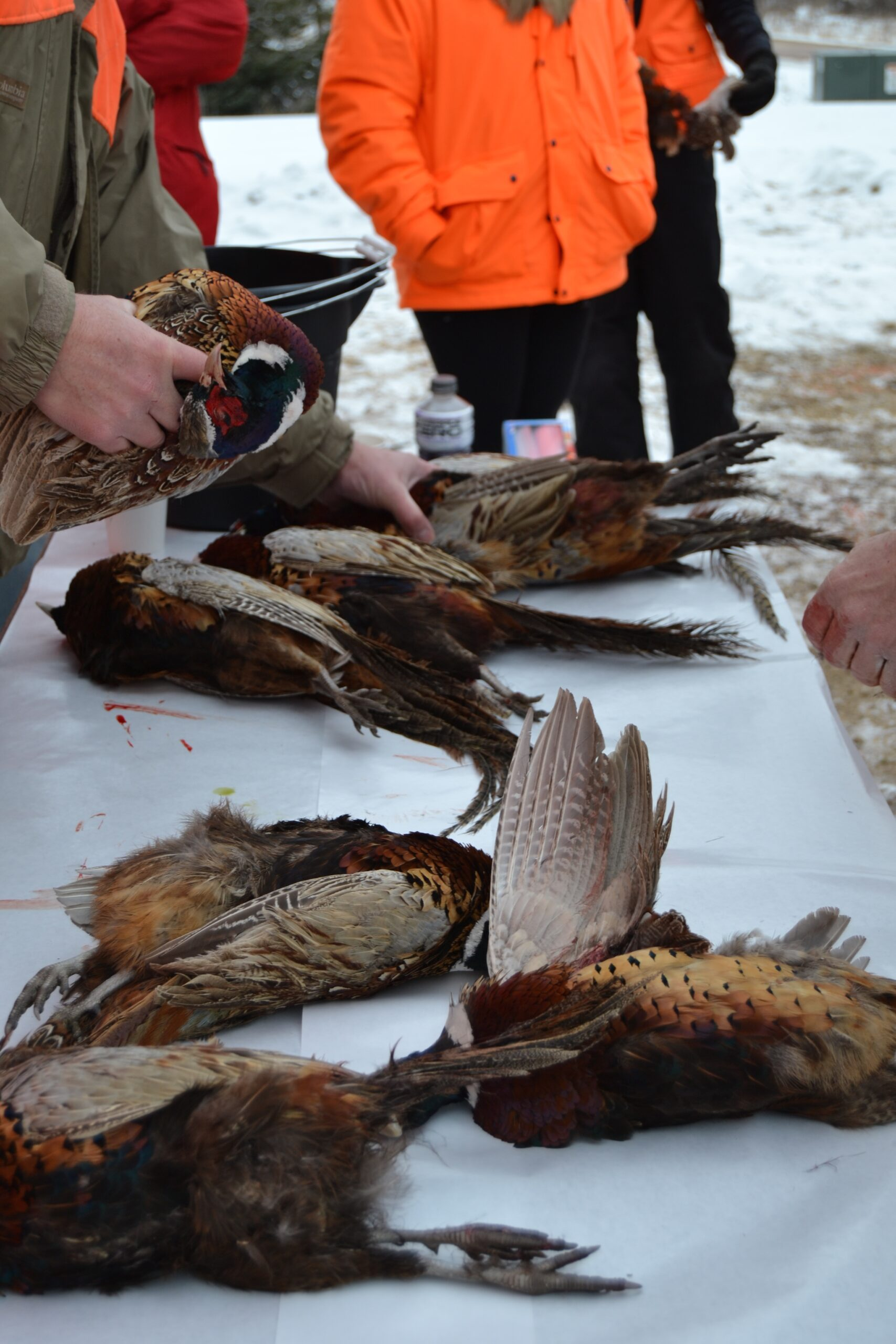 photo_from hunt to harvest_pheasants