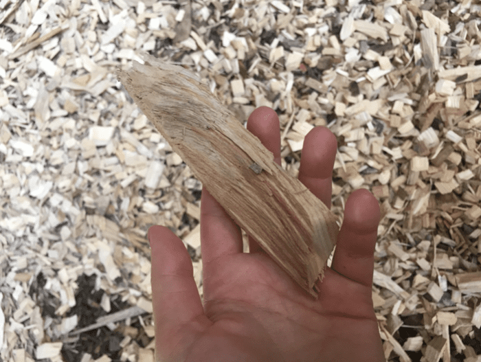 Large woodchip used to fuel the biomass boiler