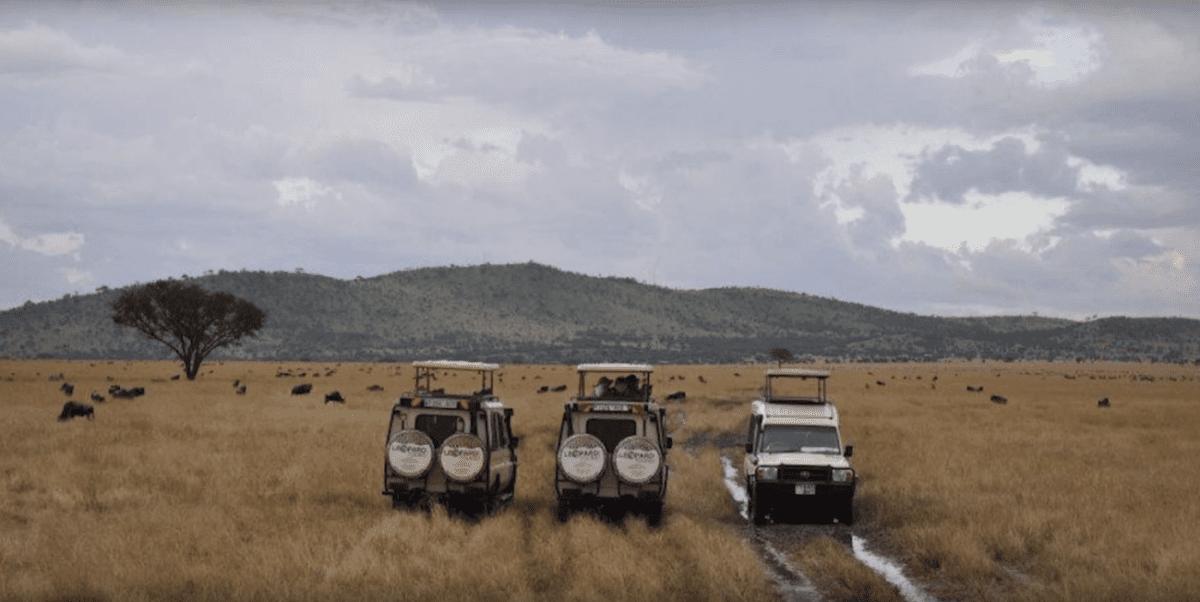 Watching wildebeests from trucks on a safari in Tanzania