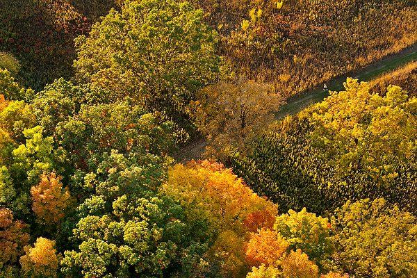 Aerial view of UW-Madison Arboreteum