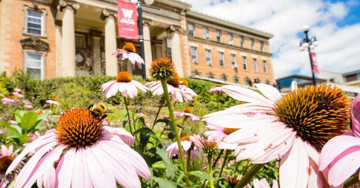 flowers on the UW campus