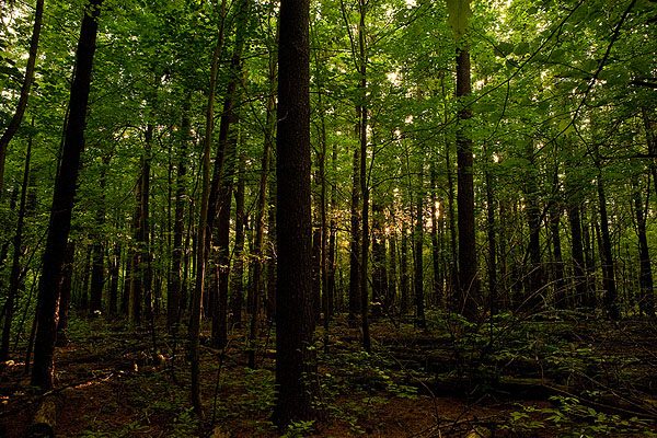The middle of a forrest of tall trees